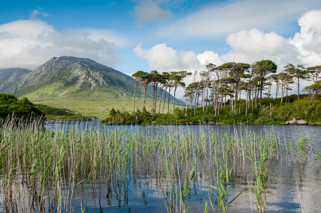 Reeds on Derryclare Lough - Visit Galway