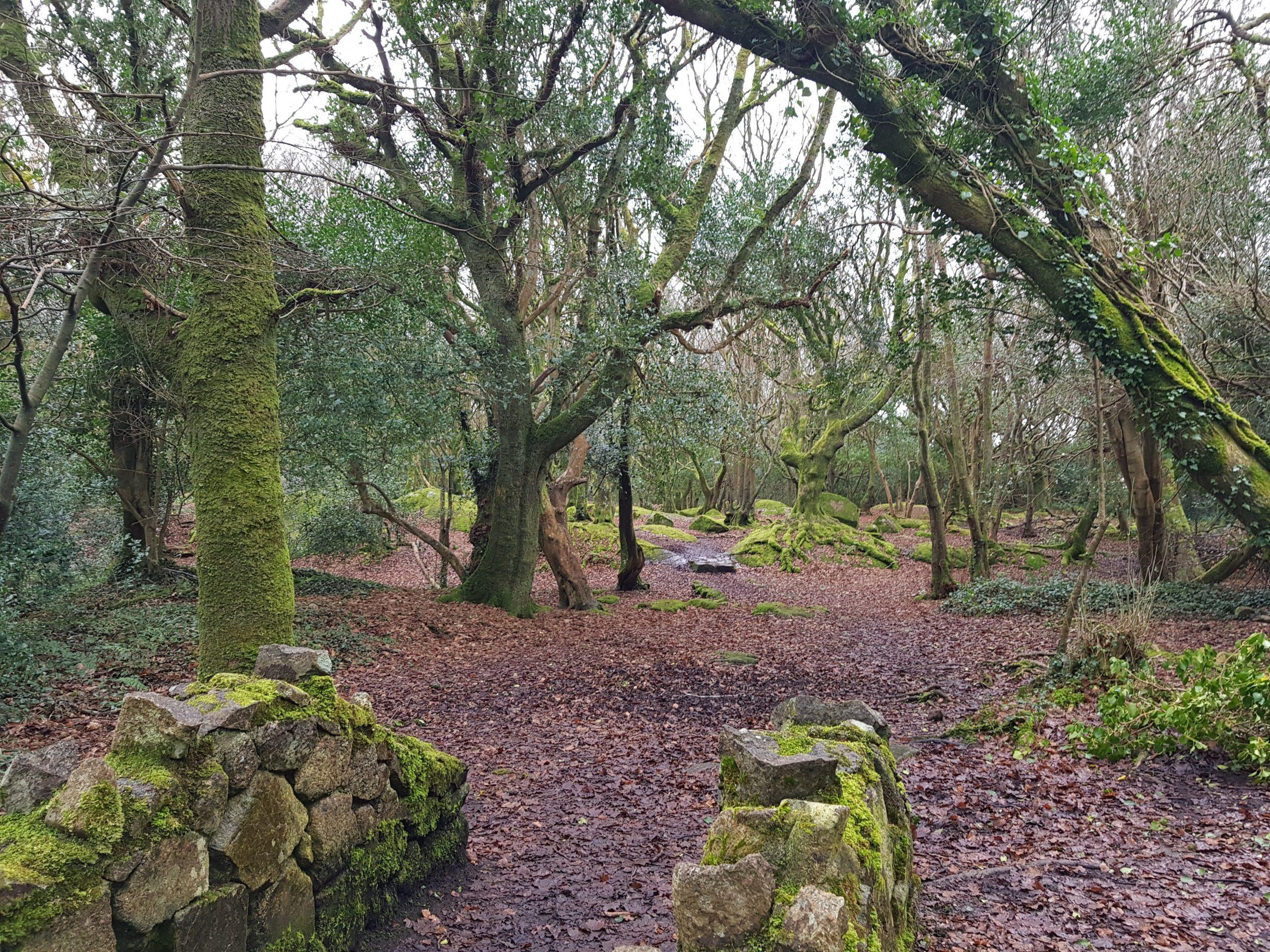 Barna Woods Walking Trails - Visit Galway