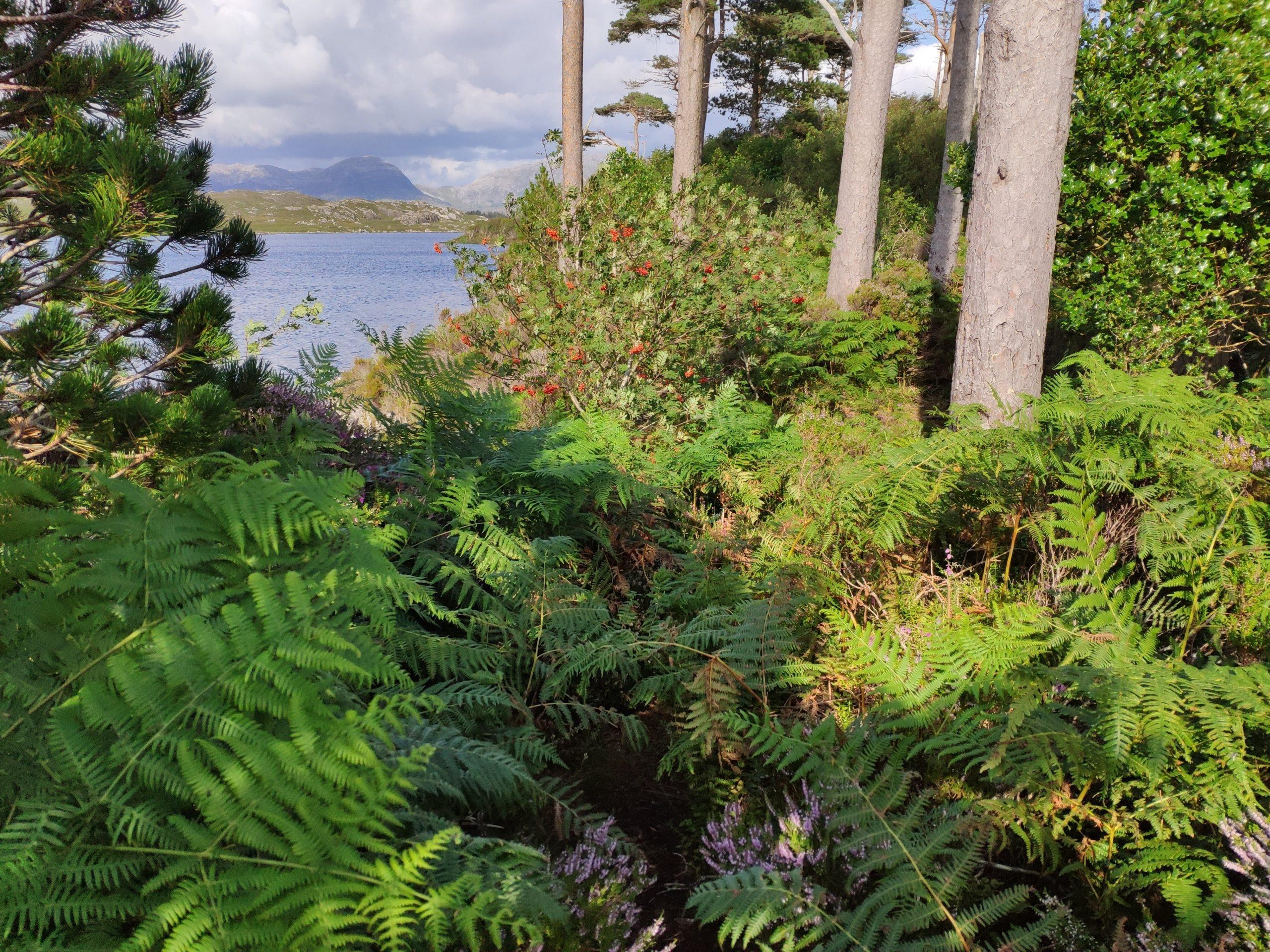 Derryclare Nature Reserve Connemara Galway - Visit Galway