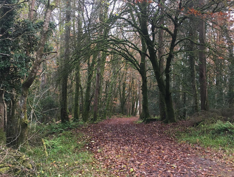 Derrycrag Wood Nature Reserve in Galway - Visit Galway