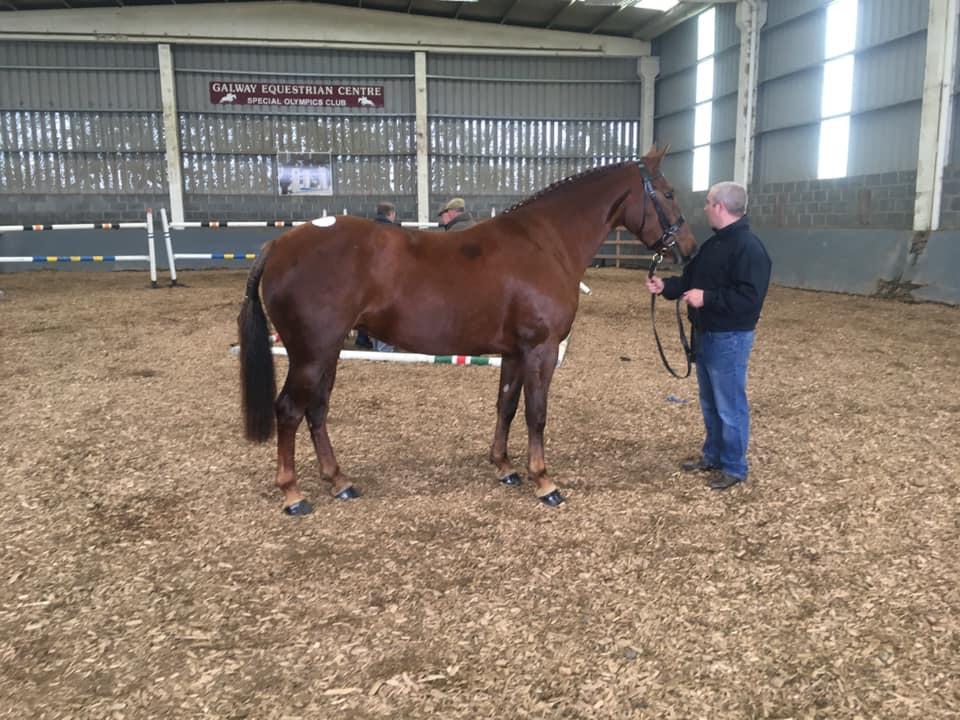 Galway Equestrian Centre Indoor Arena - Visit Galway