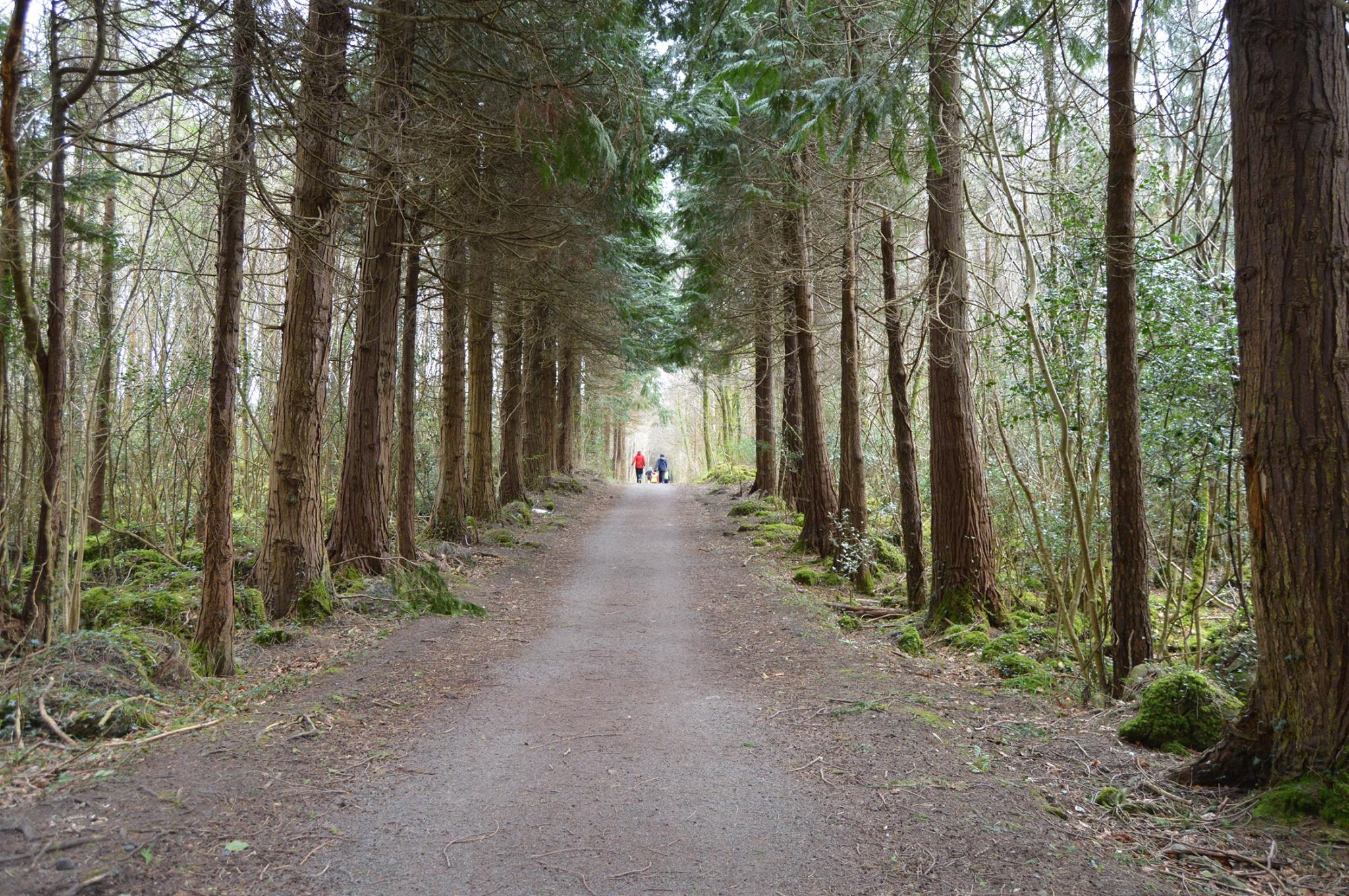 Kilcornan Woodland Walk - Visit Galway