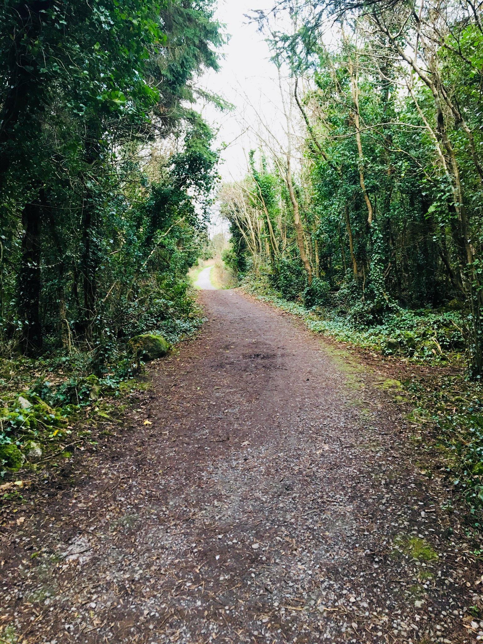 Merlin Park Woodland Path - Visit Galway