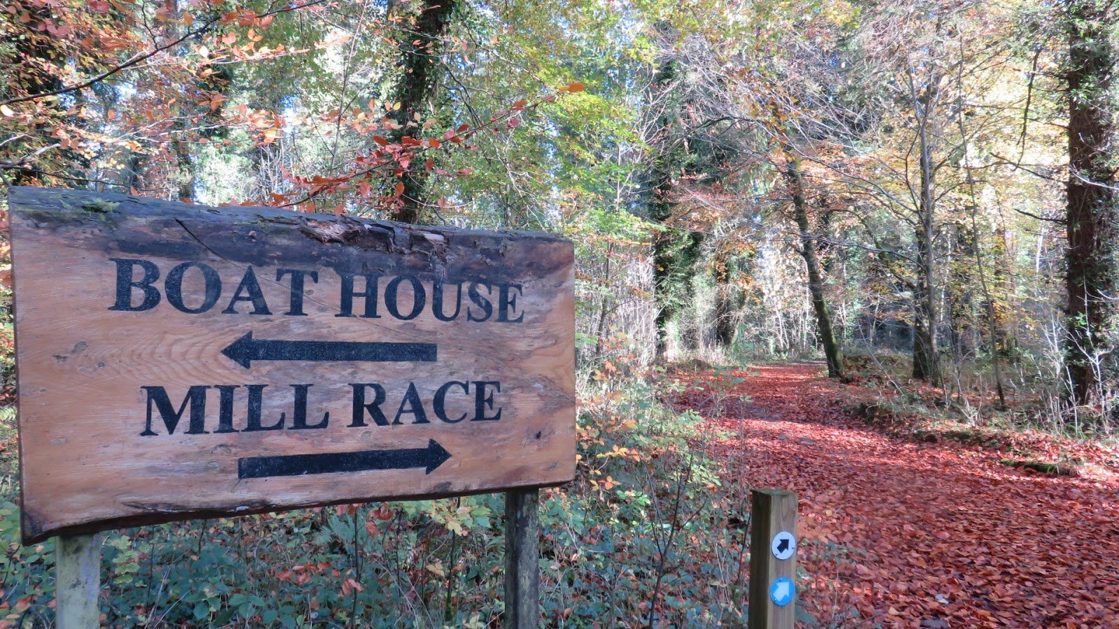Mountbellew Woodland Signpost - Visit Galway