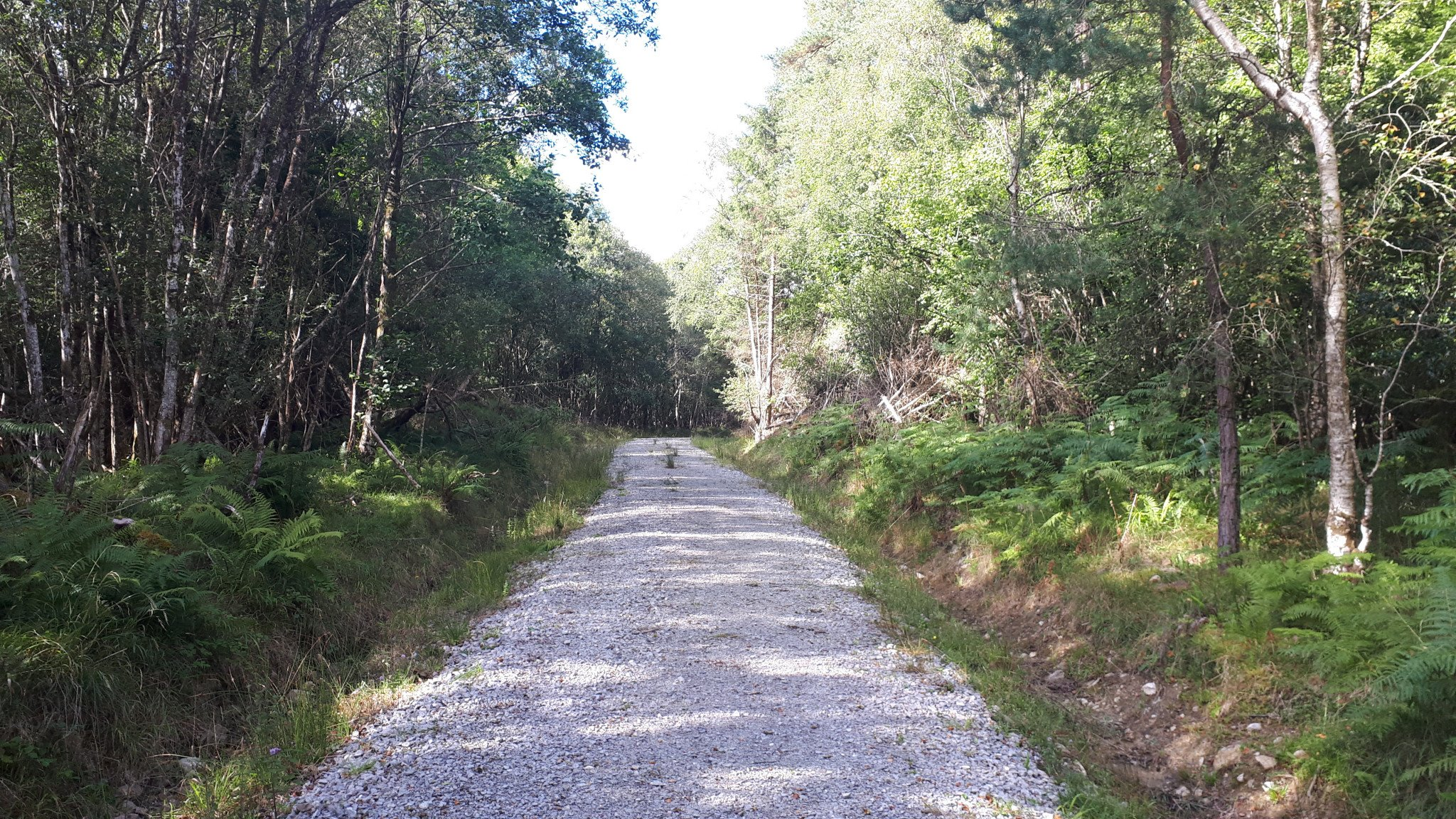 Pollnaknockaun Wood Nature Reserve - Visit Galway