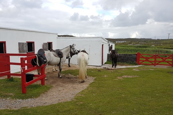 The Point Pony Trekking Centre Stables - Visit Galway