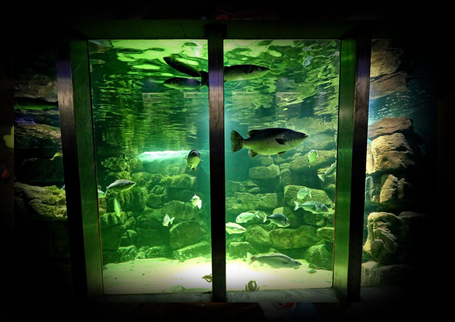 Galway Aquarium - Visit Galway